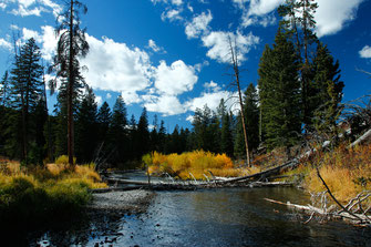 Wyoming, Yellowstone National Park Indian Summer