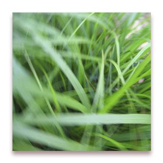 Grüner wird's nicht (Bild #037)