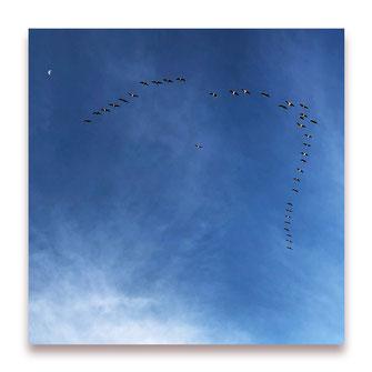 Mondflieger (Bild #057)
