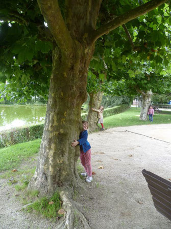 «C'est mon ami arbre.  Je le respecte et je protège son lieu de vie»