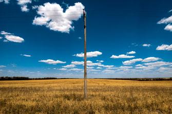 Unendliches Feld mit gereiften Bohnen als Wandposter online kaufen oder kostenlos lizenzfrei herunterladen