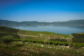 Kroatiens Weinberge direkt am Adriatischen Meer kostenlos herunterladen