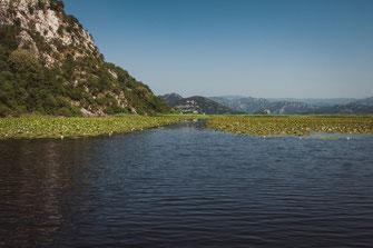 Fotos von Skadarsee - Naturschutzgebiet in Montenegro