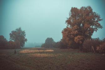 Herbstlicher Spaziergang in der Natur bei Nebel am Morgen Landschaft Herbst Frankfurt Wiese Himmel Landschaftsaufnahme Landschaftsfoto Landschaftsbild Baum Eiche Pappel Linde Schilf Gras Mensch Person Erwachsener Mann Herr