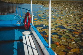 Mit dem Boot durch den dichten Jungle von Seerosen auf dem Wasser kostenlos herunterladen