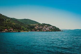 Rose bei Herceg Novi, Montenegro kostenlos herunterladen