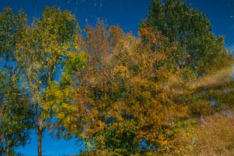 Spiegelung der Bäume im Wasser als Wandposter online kaufen oder kostenlos lizenzfrei herunterladen