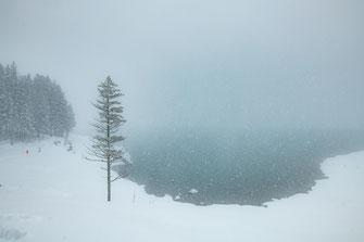 Märchenhafte Winter Landschaft am Oeschinensee in Kandersteg Schweiz - Foto für private Zwecke, Bilder für Website und Werbezwecke kostenlos lizenzfrei herunterladen.