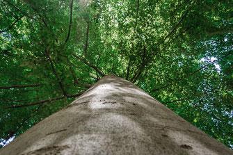 Die wahre Schönheit des Waldes als Wandposter online kaufen oder kostenlos lizenzfrei herunterladen