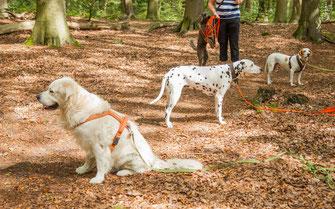 Drei Hunde beim Hundetraining in der Gruppe im Wald in Altona