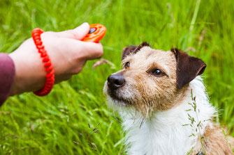 Hund beim Hundetraining mit Clicker