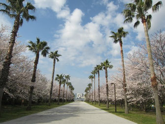 tyanmaruさん:東京都港区・潮風公園