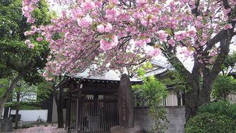 tyanmaruさん:猫地蔵の八重桜