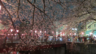 tyanmaruさん:目黒川の夜桜