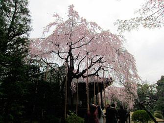 tyanmaruとお友達:東京都台東区浅草寺伝法院庭園