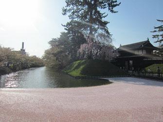 tyanmaruさん: 弘前城、お濠の花筏