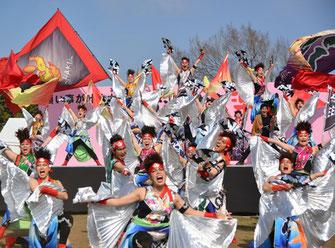 日比谷大江戸まつり 2019, ステージプログラム, 参加出演者, よさこい, ダンスパフォーマンス集団 迫 -HAKU-