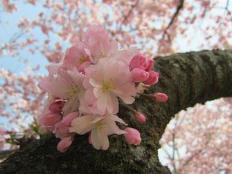tyanmaruさん:福島県伊達郡国見町 望月台公園