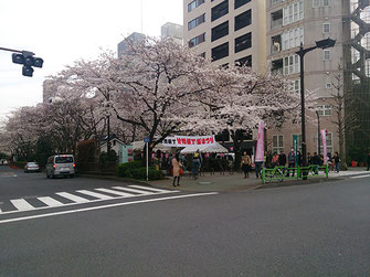 太郎さん:中央区・甘酒横町桜祭り(3/29)