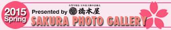 2015年度 桜フォトギャラリー