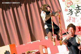 猿まわし 公演, 日光さる軍団, 太郎次郎一門, 日比谷大江戸まつり