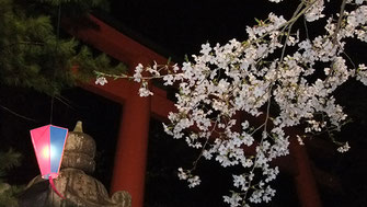 千囃蓮さん:香取神宮の夜桜