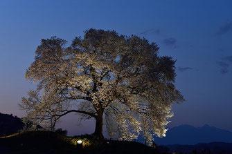 八重垣写真館さん: 山梨県韮崎市神山町 わに塚の桜