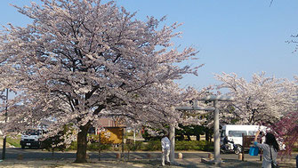 kayolinさん: 福島県福島市飯坂町 乙和公園