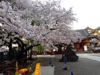 svanejyuさん:浅草神社