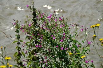 Bunte Flora an der Böschung
