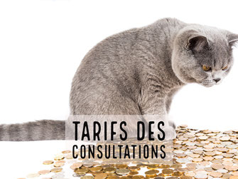 tarifs comportementaliste chat chaton paris
