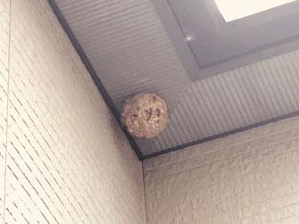 軒下に営巣したキイロスズメバチ