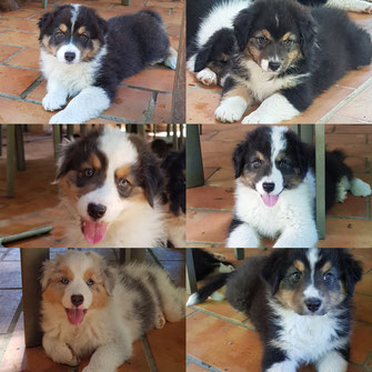 Randy, Molly(romy), Regliss, Rubie, Romie, Rhéa