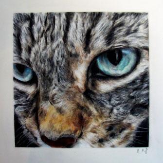 Außergewöhnliches Katzenportrait mit Pastellkreide gezeichnet