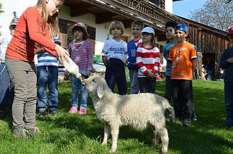 Kinderfreundlicher Bauernhof in Oberaudorf