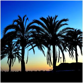 ...auf Mallorca 2019
