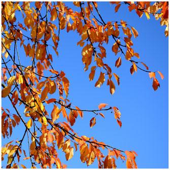 Goldener Oktober im Hessenpark