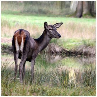 Wildpark Alte Fasanerie Herbst 2016