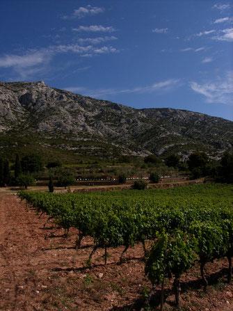 Vineyard of Domaine de Saint Ser Provence