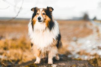 Hund Dog Simon knittel Fotograf Maulbronn Schnee Snow