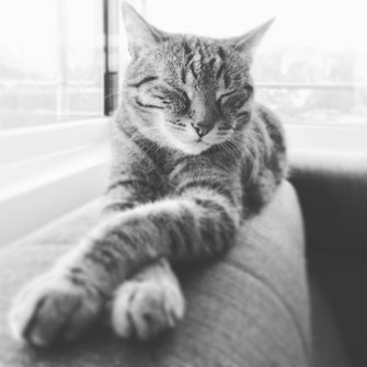 Katze Cat Simon knittel fotograf maulbronn foto
