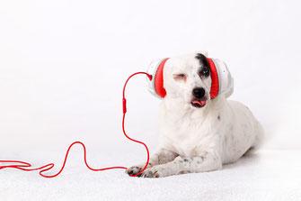 Hund Dog DJ bodeguero Simon knittel fotograf maulbronn foto
