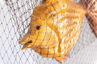 Angeln Rügen Unterkunft Hostel Fisch