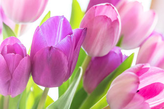 tulpen-rausch-blumen
