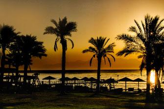 Sonnenaufgang am Roten Meer - Palmen am Strand