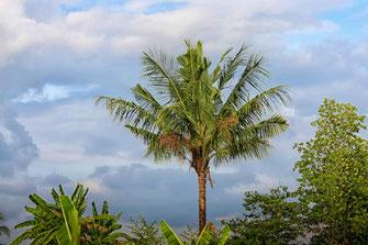 Palmen  vor Wolkenhimmel auf Koh Phangan