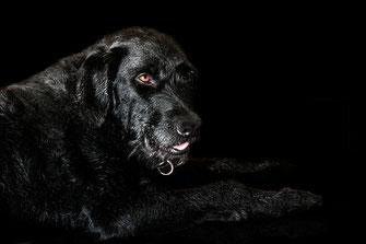 ben-hund-auf-schwarzem-hintergrund