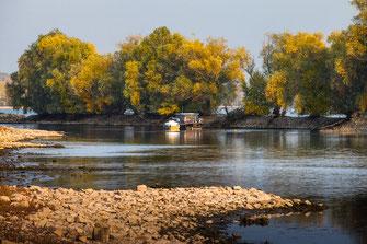 Rheininseln mit Booten im Herbst