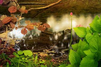 Am kleinen Bach im Frühling © www.mjpics.de