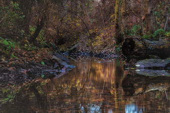 Herbststimmung am kleinen Bach ♦ Langzeitbelichtung © Jutta M. Jenning-mjpics.de